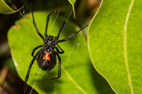 The Mystery of Spider Silk Further Unraveled