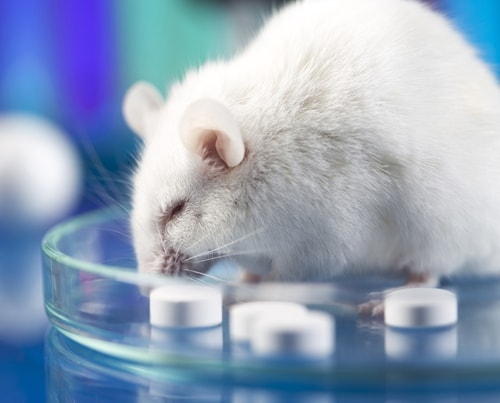 Mice and Minds by Ampronix Medical News